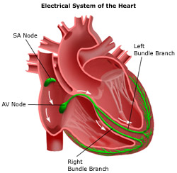 Private Cardiology - Electrophysiology